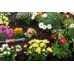 Gardena Above Ground Drip Irrigation Line 4.6mm - 1362-20 Gardena Micro Drip Kits